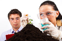 Scientists making experiment. A young woman scientist  holding a pipette with a liquid and pouring on a plant in soil  while the man sitting in background and Royalty Free Stock Photo