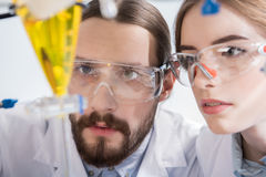 Scientists making experiment. Young male and female scientists making experiment in laboratory Stock Images