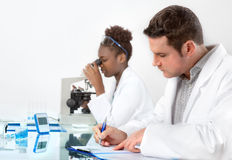 Scientists, male and female, work in laboratory Royalty Free Stock Photo
