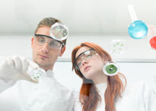 Scientists observing petri dish Royalty Free Stock Photo
