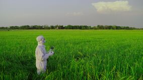 Scientists are piloting drones in rice fields for scientific experiments.