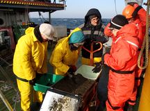The Sea of Japan / Russia - November 30 2013: Scientists processing the sample of deepwater mud catched with the box core royalty free stock photography