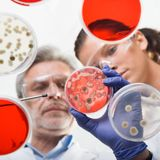 Life scientists researching in the health care laboratory. Royalty Free Stock Photos