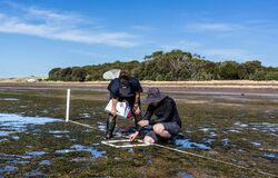 Free Scientists Studying Distribution Of Seagrass Royalty Free Stock Images - 181376679