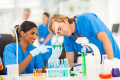 Scientists Studying Substances Stock Image