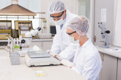 Scientists weighing corn in petri dish Stock Photography