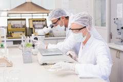 Scientists weighing corn in petri dish Royalty Free Stock Photo