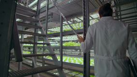 Scientists in white coats with a laptop go along the corridor of the farm with hydroponics and discuss the results of