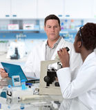 Scientists work in histological lab Stock Image