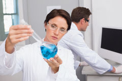 Scientists working attentively Stock Image