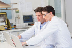 Scientists working attentively with laptop Royalty Free Stock Photo