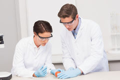 Scientists working attentively with tomato Royalty Free Stock Photo
