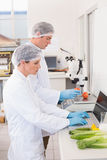 Scientists working attentively with vegetables Royalty Free Stock Image