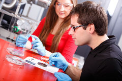 Scientists working Stock Images