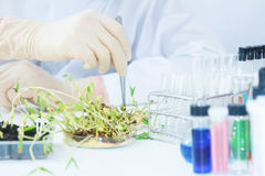 Scientists working at the laboratory,scientist leaning against t stock images