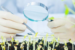 Scientists working at the laboratory,scientist leaning against t Royalty Free Stock Images