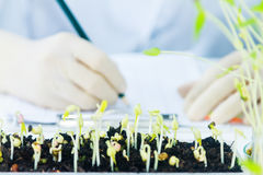 Scientists working at the laboratory,scientist leaning against t royalty free stock image