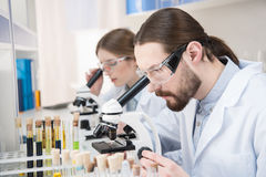 Scientists working with microscopes. Young male and female scientists working with microscopes in laboratory Royalty Free Stock Photo