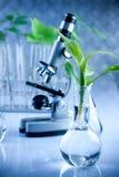 Scienza floreale Immagini Stock