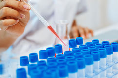 Scienziati che sperimentano nel laboratorio Immagini Stock Libere da Diritti