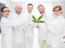 Scienziati che tengono una foglia geneticamente modificata immagini stock