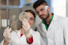 Scienziati degli studenti che lavorano nel laboratorio Immagini Stock Libere da Diritti