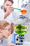 Scienziati dello studente e dell'insegnante in camice che fanno esperimento Immagini Stock