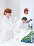 Scienziati in un laboratorio genetico di ingegneria Immagini Stock Libere da Diritti