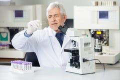 Scienziato Analyzing Microscope Slide in laboratorio Immagine Stock