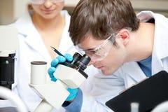 Scienziato caucasico che osserva tramite un microscopio Fotografia Stock Libera da Diritti