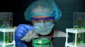 Scienziato che analizza polvere assorbente verde nella capsula di Petri, sviluppo del fertilizzante immagine stock