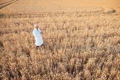 Scienziato che effettua prova in loco di nuovo grano OMG per migliore rendimento fotografie stock