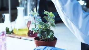 Scienziato che fa gli esperimenti su una pianta stock footage