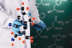 Scienziato che mostra modello molecolare Fotografia Stock Libera da Diritti