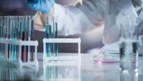 Scienziato che prende le gocce dei liquidi alla reazione chimica del controllo al laboratorio di ricerca fotografia stock libera da diritti