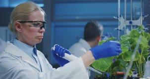 Scienziato che sperimenta con una pianta verde video d archivio