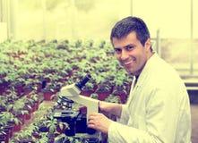 Scienziato con il microscopio in serra Fotografia Stock