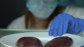 Scienziato del laboratorio che controlla i campioni del fegato con la competenza dell'alimento della lente d'ingrandimento archivi video