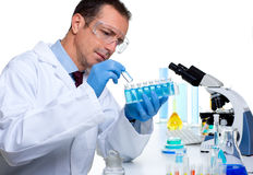 Scienziato del laboratorio che lavora al laboratorio con le provette Fotografia Stock Libera da Diritti