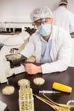 Scienziato dell'alimento che esamina la capsula di Petri sotto il microscopio Immagine Stock
