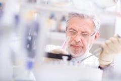 Scienziato di vita che ricerca in laboratorio. Immagine Stock
