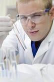 Scienziato maschio con la provetta in laboratorio Fotografia Stock Libera da Diritti