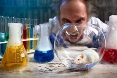 Scienziato pazzo che urla sul topo del laboratorio immagini stock
