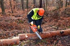 Scier dans la forêt Images libres de droits