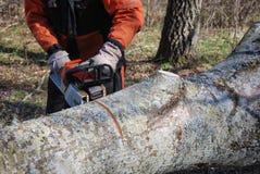 Scier un grand tronc d'arbre Images libres de droits