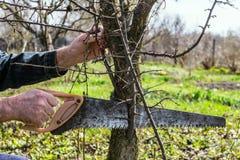 Scies de jardinier outre des branches supplémentaires image stock