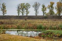 Scies sur le delta de Comana images libres de droits