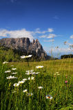 Sciliar από Seiser Alm Alpe Di Siusi, δολομίτες Ιταλία Στοκ Εικόνες