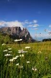 Sciliar от Seiser Alm Alpe di Siusi, доломитов Италия Стоковые Изображения