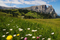 Sciliar da Seiser Alm Alpe di Siusi, dolomia, Trentino-Alto Adige Fotografie Stock